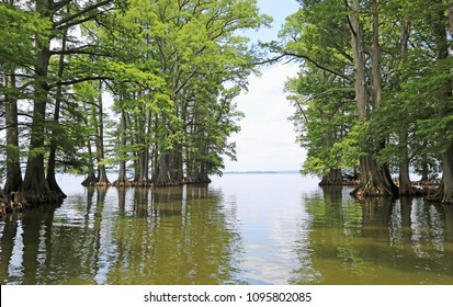 Cypress gate to Reelfoot Lake - Reelfoot Lake State Park, Tennessee