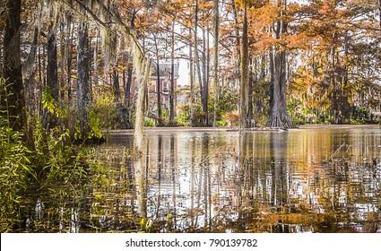 The cypress lake at Lafayette