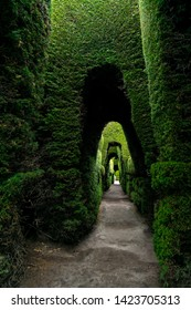 Cypress tree is ideal for make art like this image. Here, it can see a tunnel of plants kind of cypress. A garden, a construction, a building, a cemetery, this is Tulcan, Ecuador.