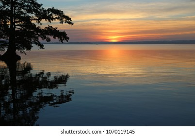 Cypress tree and sunrise - Reelfoot Lake State Park, Tennessee