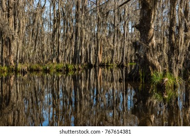Cypress tree trunks and their water reflections in the swamps near New Orleans, Louisiana during the autumn season.