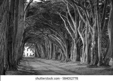 Cypress tree tunnel, Point Reyes, California