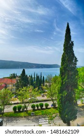 Cypress tree with view of harbor, Herceg Novi, Montenegro