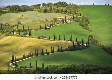 Cypress trees along winding rural road. Tuscany, Italy