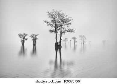 Cypress trees emerge from a fog covered lake