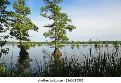 State Of Tennessee Images, Stock Photos & Vectors | Shutterstock