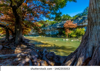 Cypress Trees in the Shade of Bright Orange Fall Foliage at Guadalupe State Park, Texas