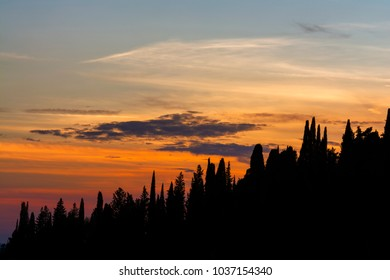 Cypress trees at sunset with colorful sky, silhouettes