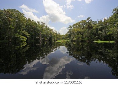 Cypresses and reflections on Fisheating Creek, which flows into Lake Okeechobee near the town of Palmdale, Florida.