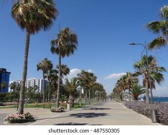 Cyprus, Limassol, Palm trees