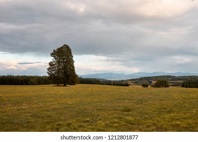 Czech landscape with big tree and Beskydy mountain in the distance, dark clouds on the sky