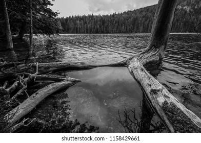 Czech republic, šumava, lake, tree - Shutterstock ID 1158429661