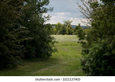 Czech Republic - Meadows in Olomouc