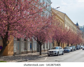 Czech Republic, Prague, April 13, 2019: Parkway with blooming sakura chrry trees on Karlinske namesti square park with gothic church and trees, blue sky background