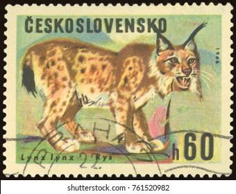 CZECHOSLOVAKIA - CIRCA 1966: a stamp, printed in Czechoslovakia, shows a Rys animal, circa 1966.