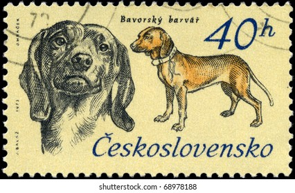 """CZECHOSLOVAKIA - CIRCA 1973: A Stamp printed in CZECHOSLOVAKIA shows image of a Bavarian Hunting Dog from the series """"Hunting Dogs"""", circa 1973"""