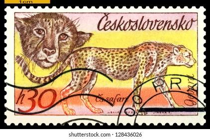 CZECHOSLOVAKIA  - CIRCA 1976: A stamp printed in  Czechoslovakia shows wild cats Cheetahs, series, circa 1976