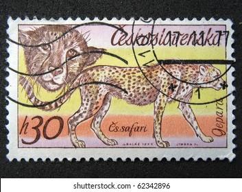 CZECHOSLOVAKIA - CIRCA 1976: A stamp printed in Czechoslovakia shows cheetah, a series of African animals in Dvur Kralove Zoo, circa 1976
