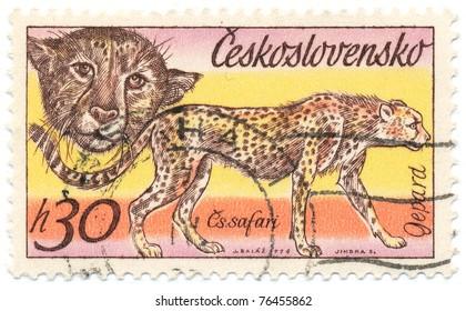CZECHOSLOVAKIA - CIRCA 1976: A stamp printed in Czechoslovakia, shows Cheetah, circa 1976
