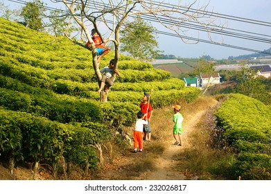 DA LAT, VIET NAM- JAN 24: Group of Asian children with outdoor activity, Vietnamese boy climbing to tree at tea garden, active kid happy with friendship, Dalat, Vietnamese, Jan24, 2014