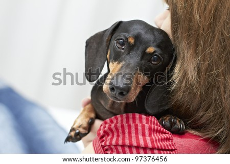 Dachshund dog breed with owner
