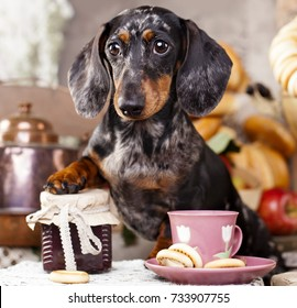 dachshund dog and cup tea