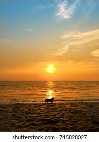 Dachshund dog enjoying at beach and looking at sunset