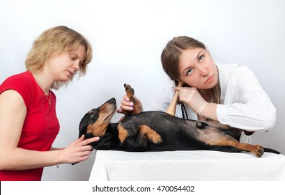 Dachshund dog and his owner examination by a veterinary doctor