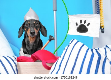 Dachshund dog in knights helmet and chain mail sits on barricade built from handy materials and interior items, flag with paw print behind. Arrow with suction cup as warhead for catapult from bra