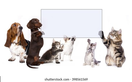 Dog High Five' Images, Stock Photos & Vectors | Shutterstock