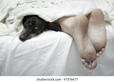 Dachshund dog sleeping beside feet