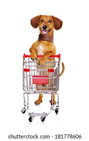 dachshund dog standing next to the  shopping cart