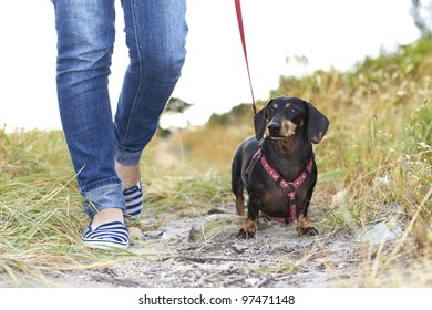 Dachshund dog taking a walk in the park with owner dressed in denim pants