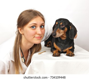 dachshund dog and veterinary doctor
