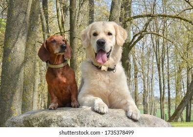 Dachshund und Golden Retriever auf dem großen Stein im Park