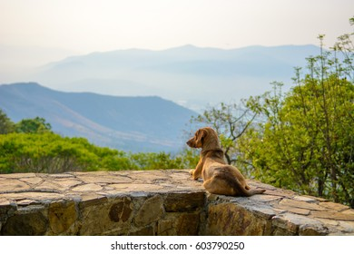 Dachshund lying at Monte Alban, Mexico