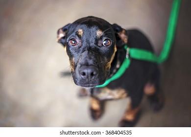 Dachshund Mix Dog