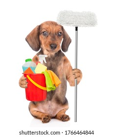 Dachshund puppy holds bucket with washing fluids and mop in it paw. Cleaning concept. isolated on white background