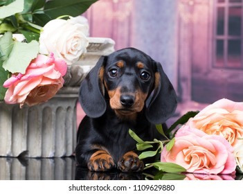 dachshund puppy small and flowers