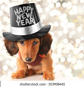 Dachshund puppy wearing a Happy New Year top hat.