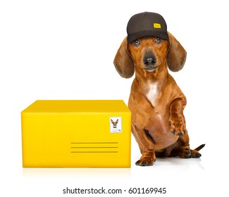 dachshund sausage dog delivering a big brown package as a postman with cap , isolated on white background