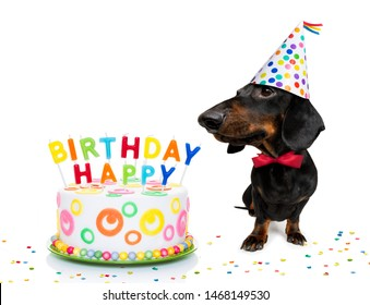 dachshund or sausage  dog  hungry for a happy birthday cake with candles ,wearing  red tie and party hat  , isolated on white background