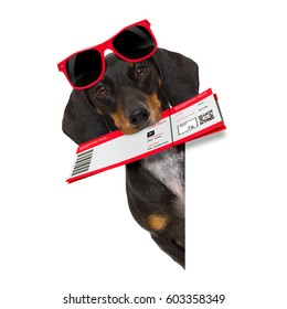 dachshund or sausage  dog on summer vacation holidays with airline flight ticket  isolated on white background