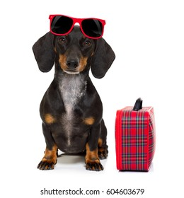 dachshund or sausage  dog on summer vacation holidays with sunglasses and bag or luggage , isolated on white background