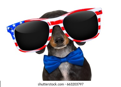 dachshund sausage dog wearing sunglasses of usa  on  independence day 4th of july, isolated on white background
