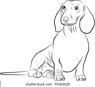 dachshund silhouette on a white background - freehand