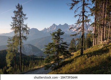 Dachstein mountain range behind trees at hiking path in Austria.