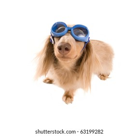 a dacshund with goggle on