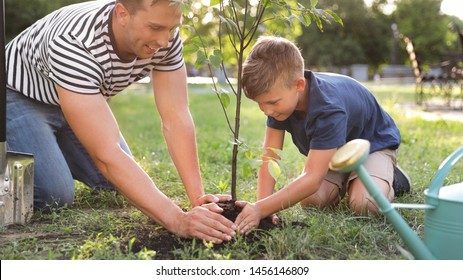 Dad and son planting tree in park on sunny day