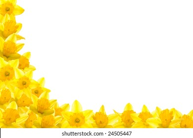 Daffodil corner, isolated on white background